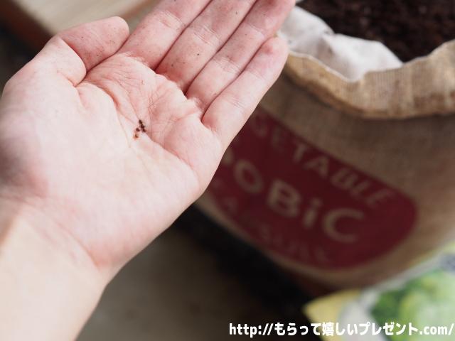 SoBiC(ソビック)